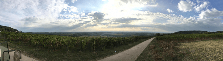 De wijngaarden van Lukas Kesselring in de Pfalz in Duitsland