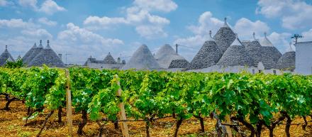 Puglia - Land van de Doppio Passo Primitivo